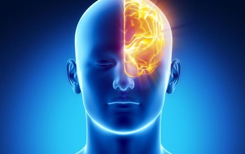 cerebro1.jpg