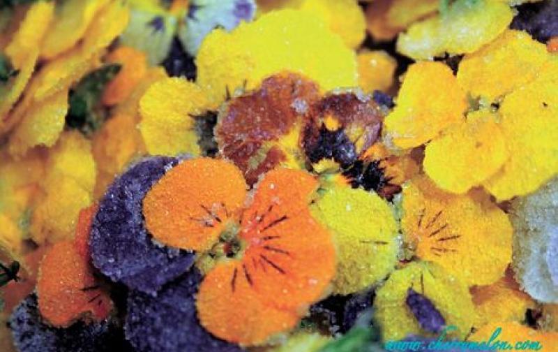 flores-comestibles-foto-omaorganicocom-pattiquintoimagencom_lrzima20140917_0068_11.jpg