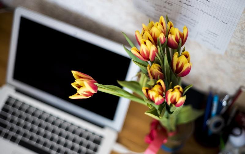 flowers-871685_1280.jpg