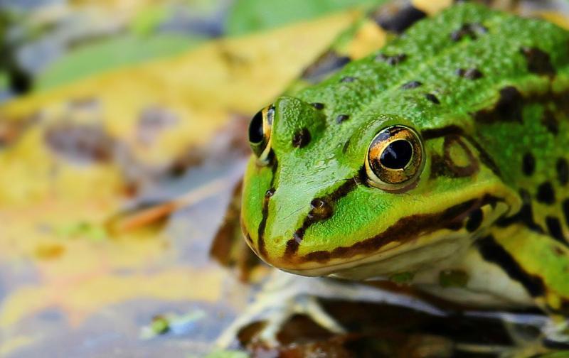 frog-1530803_1280.jpg