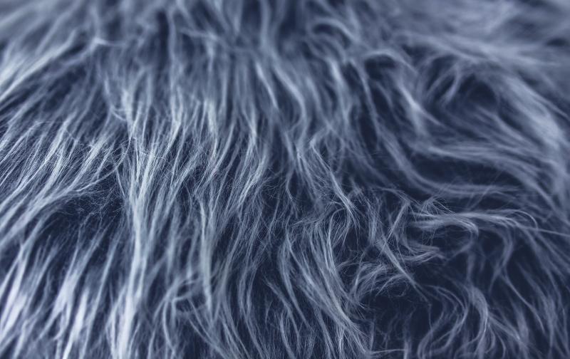 fur-gray-grey-5935.jpg