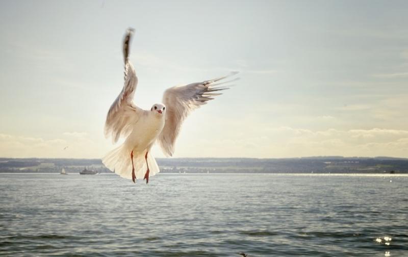 gull-192909_640.jpg