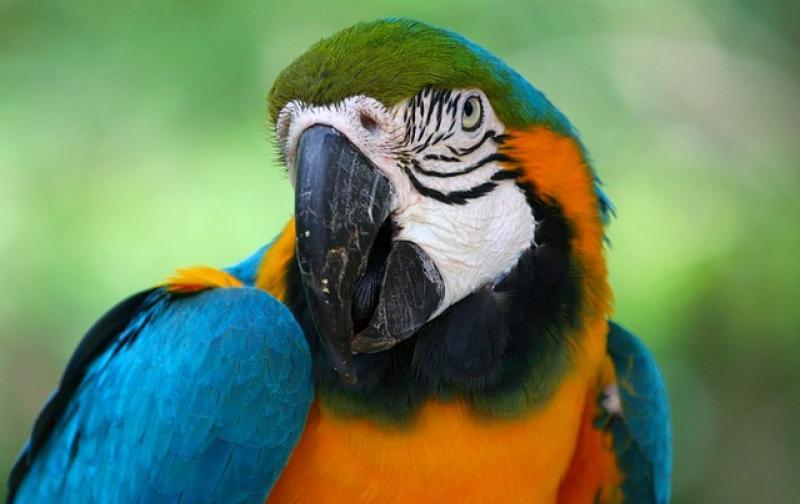 parrot-58407_640.jpg