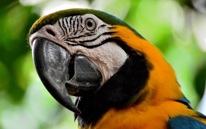 parrot-892940_1280.jpg