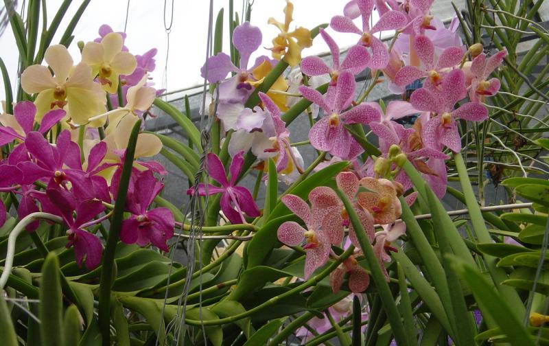 Plantas De Interior Tropicales. Beautiful Interior Invernadero De ...