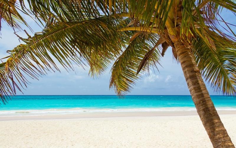 playa_hermosa_palmera.jpg