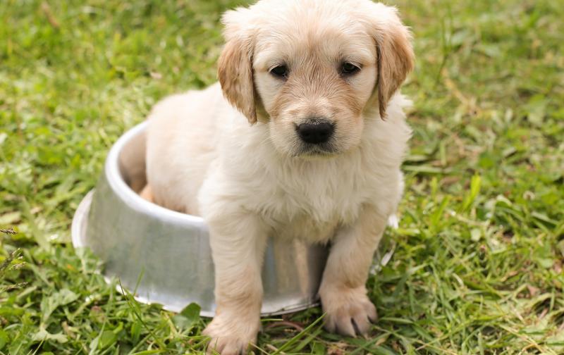 puppy-1207816_1280.jpg