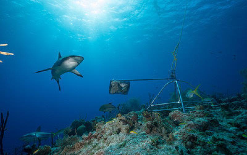 tiburones_funcionalmente_extintos.jpg