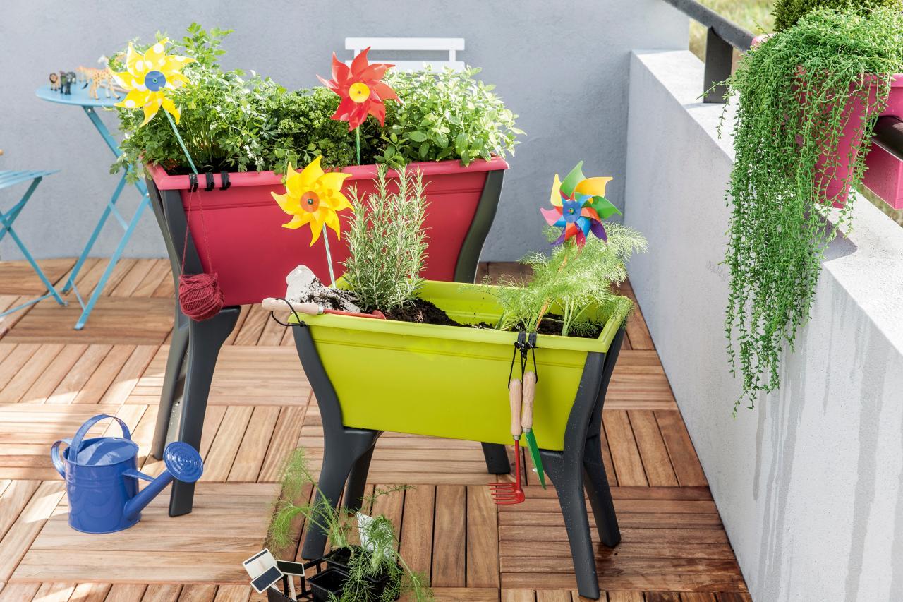 D nde coloco las plantas breve gu a para mejores for Diseno de jardines caseros