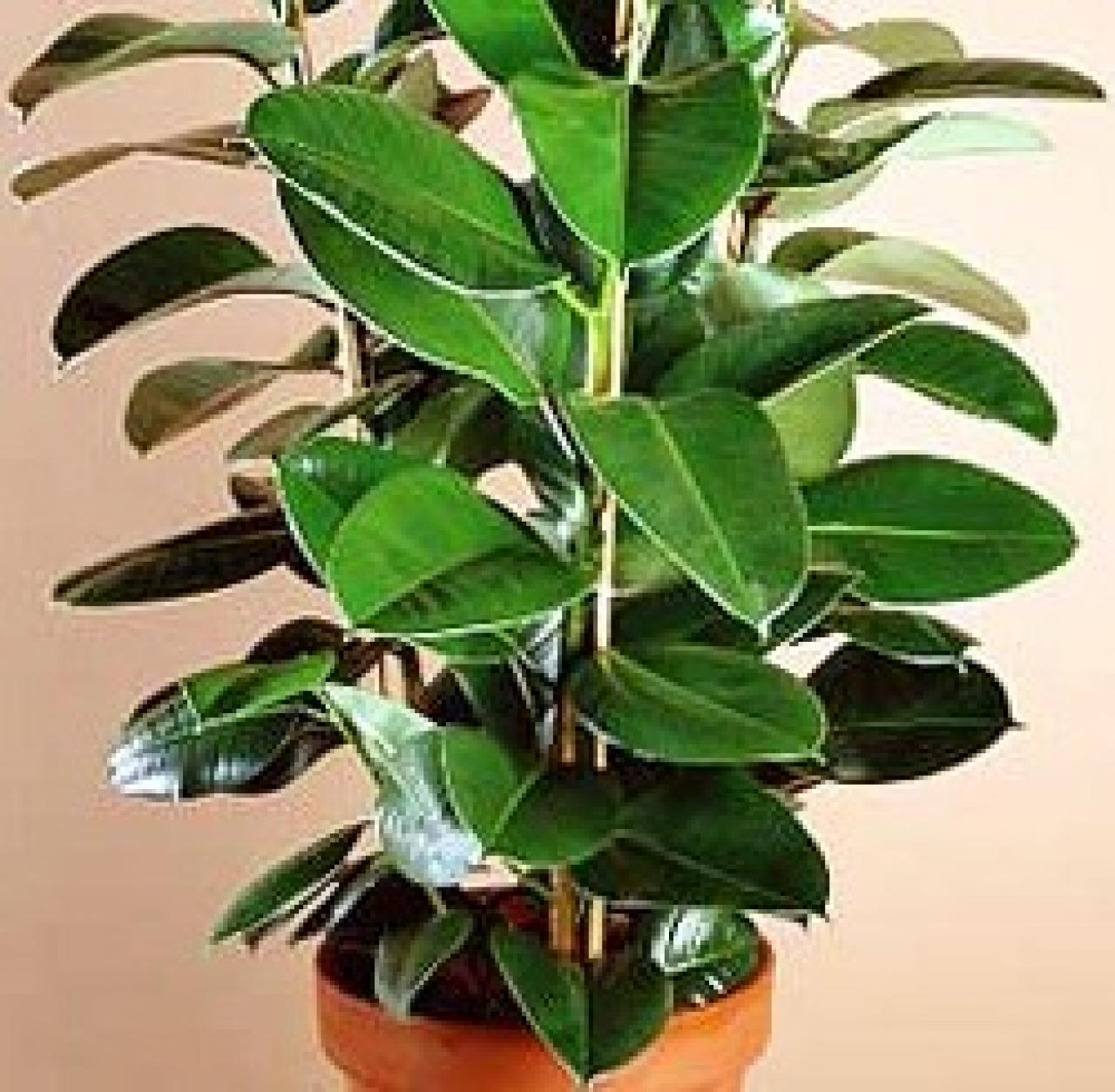As es el poder de las plantas de interior Lifestyle de