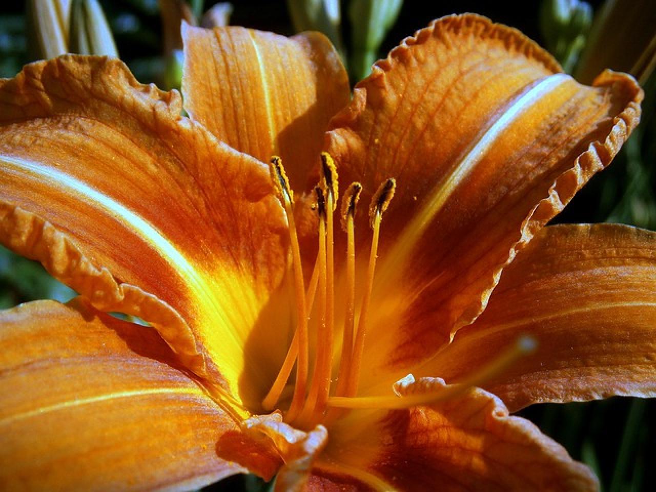 Del ramo a la maceta la nueva tendencia de regalar flores for Vivero hijuelas