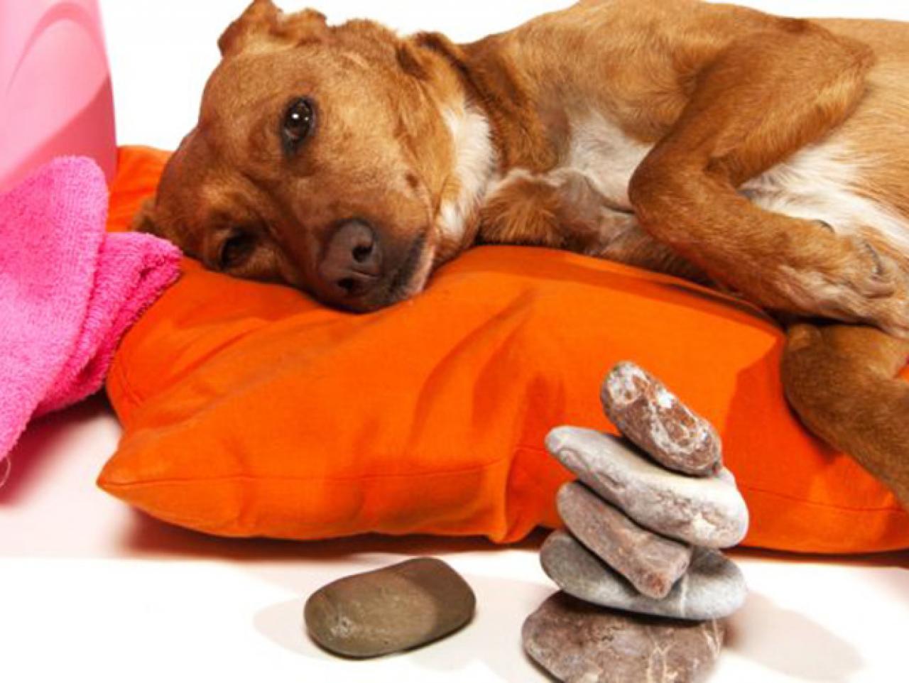mejor masaje estilo perrito