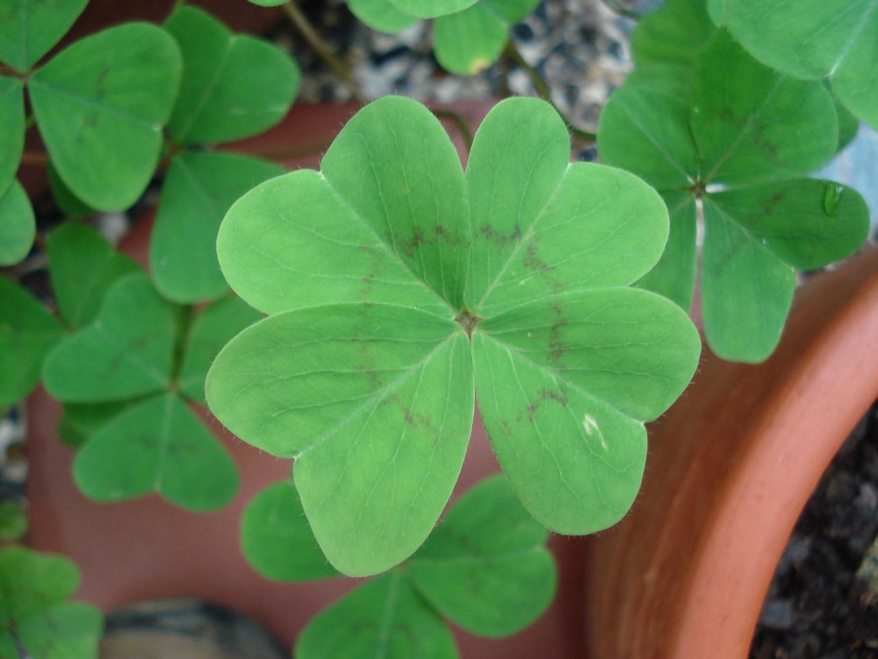 Gente con verdadera buena suerte en la vida - Mala suerte en la vida ...