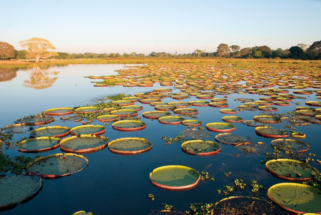 Fotos do aviao da pantanal 23