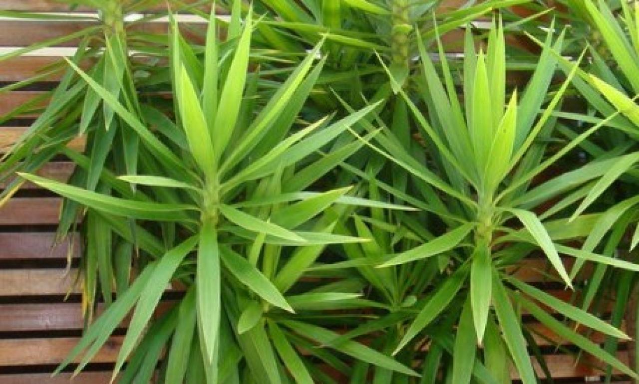 Asi Es El Poder De Las Plantas De Interior Lifestyle De - Plantas-verdes-exterior